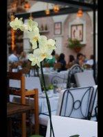https://www.alburakathisma.com/images/galeri/orjinal/albura-Garden-19.jpg